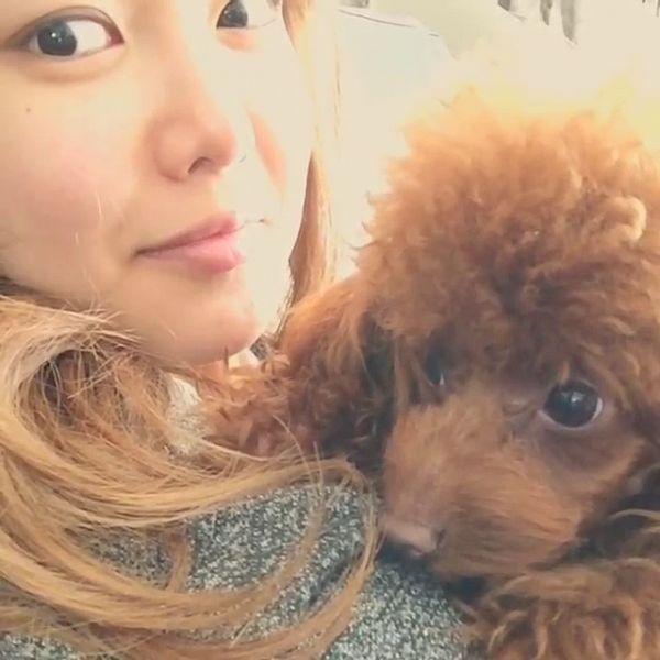Bori (Dog) - Sooyoung
