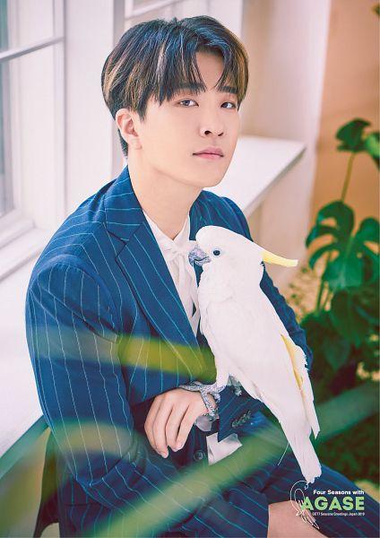 Tags: K-Pop, Got7, Choi Youngjae, Bird, Multi-colored Hair, Plant, Blue Pants, Striped Jacket, Striped, Animal, Striped Pants, Blue Jacket