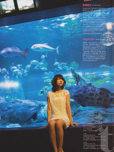 Fish - Animal