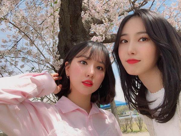 Tags: K-Pop, G-friend, Eunha, SinB, Pink Shirt, Pink Flower, Two Girls, Cherry Blossom, Medium Hair, Duo