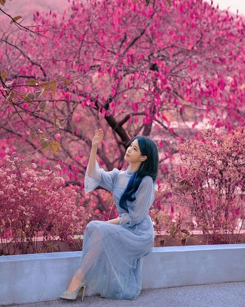 Tags: K-Pop, IU, Looking Up, Blue Hair, One Arm Up, Tree, High Heels, Plant, Pink Flower, Flower, Blue Dress, Blue Outfit