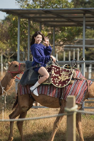 Tags: K-Pop, Berry Good, Kang Sehyung, Blue Shirt, Shorts, Blue Shorts, Animal, Grin, Camel, Horseback Riding, Wind, Wave