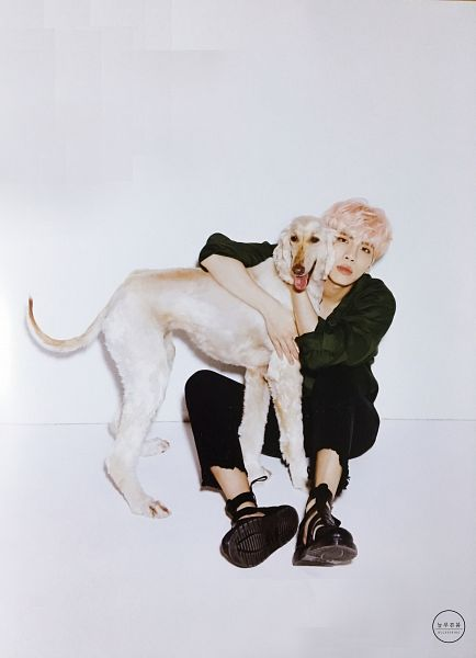 Tags: SM Town, K-Pop, SHINee, Kim Jonghyun, Pink Hair, Dog, Full Body, Animal, Scan, Android/iPhone Wallpaper, Oh Boy!, Magazine Scan