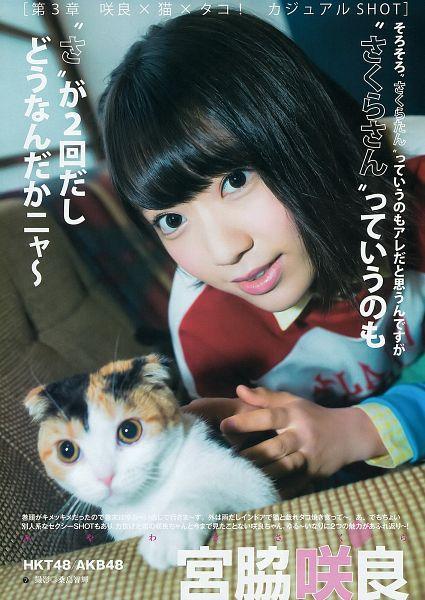 Tags: J-Pop, HKT48, AKB48, Miyawaki Sakura, Android/iPhone Wallpaper