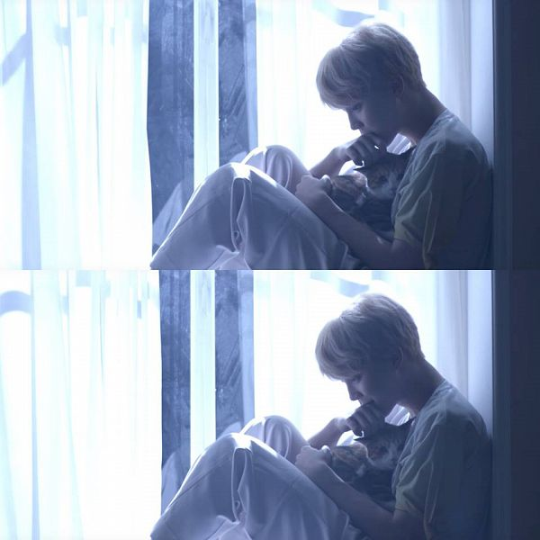 Tags: K-Pop, BTS, Serendipity, Park Jimin, Cat, Side View, Collage, Animal, Indoors, Love Yourself: Her