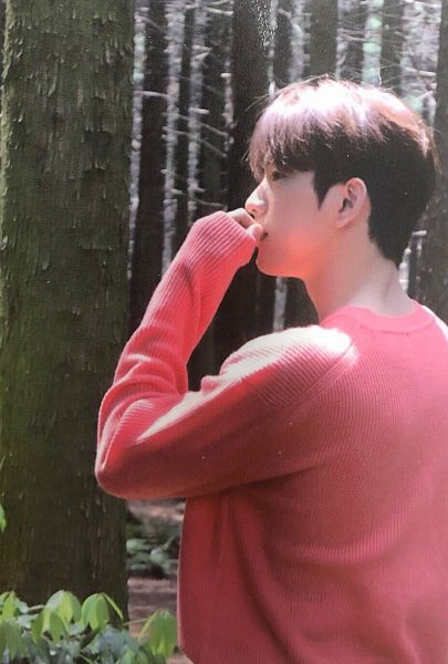 Tags: K-Pop, Got7, Park Jinyoung (Junior), Outdoors, Serious, Pink Shirt, Plant, Tree, Forest, Side View, Hey Guys