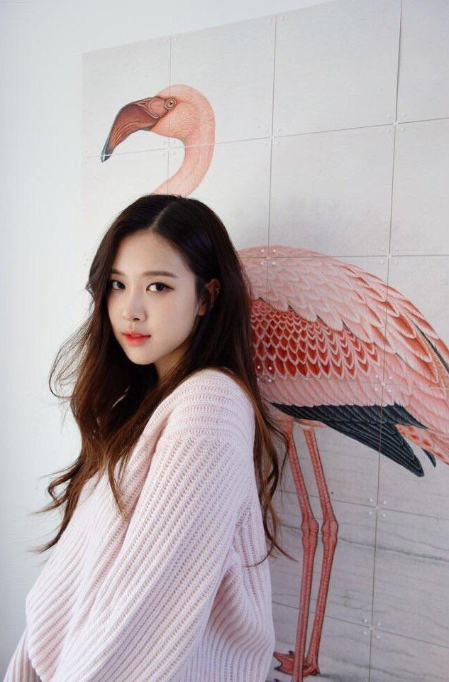 Tags: K-Pop, Black Pink, Rosé (singer), Pink Shirt, Bird, Light Background, Flamingo, Sweater, White Background, Wall, Animal