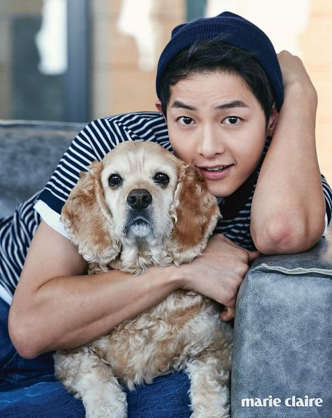 Tags: K-Drama, Song Joong-ki, Dog, Animal