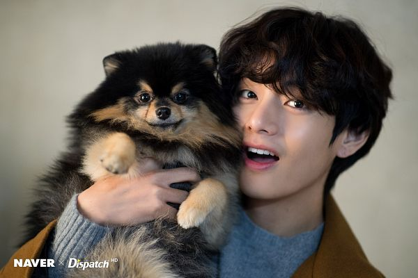 Tags: K-Pop, BTS, V (Kim Taehyung), Yeontan, Dog, Close Up, Animal, English Text, Black Eyes, Wavy Hair, Sweater, Dispatch