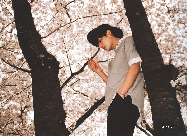 Tags: K-Pop, BTS, V (Kim Taehyung), From Below, Flower, Pink Flower, In A Tree, Black Pants, Gray Shirt, Short Sleeves, Black Headwear, Hand In Pocket