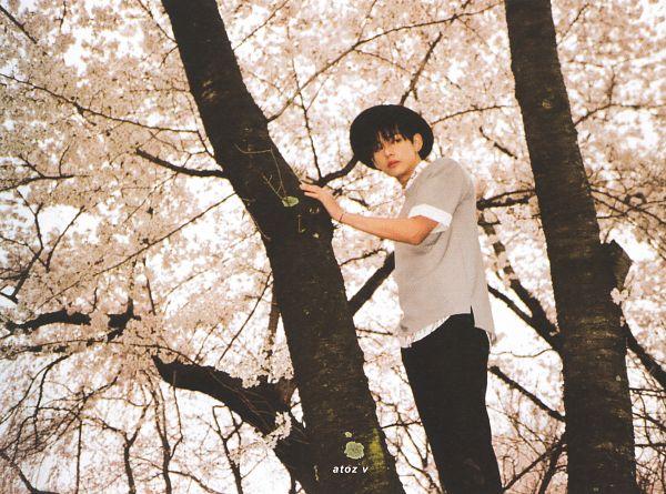 Tags: K-Pop, BTS, V (Kim Taehyung), Bracelet, Black Eyes, Black Headwear, Cherry Blossom, Serious, Tree, Pink Flower, Looking Back, Gray Shirt