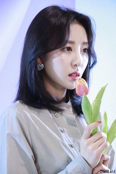 Tags: K-Pop, LOOΠΔ, Yves, Tulip, Flower, Pink Flower